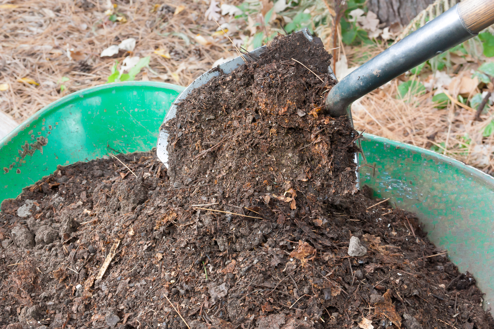 Composting Brings Life Back in Your Soil