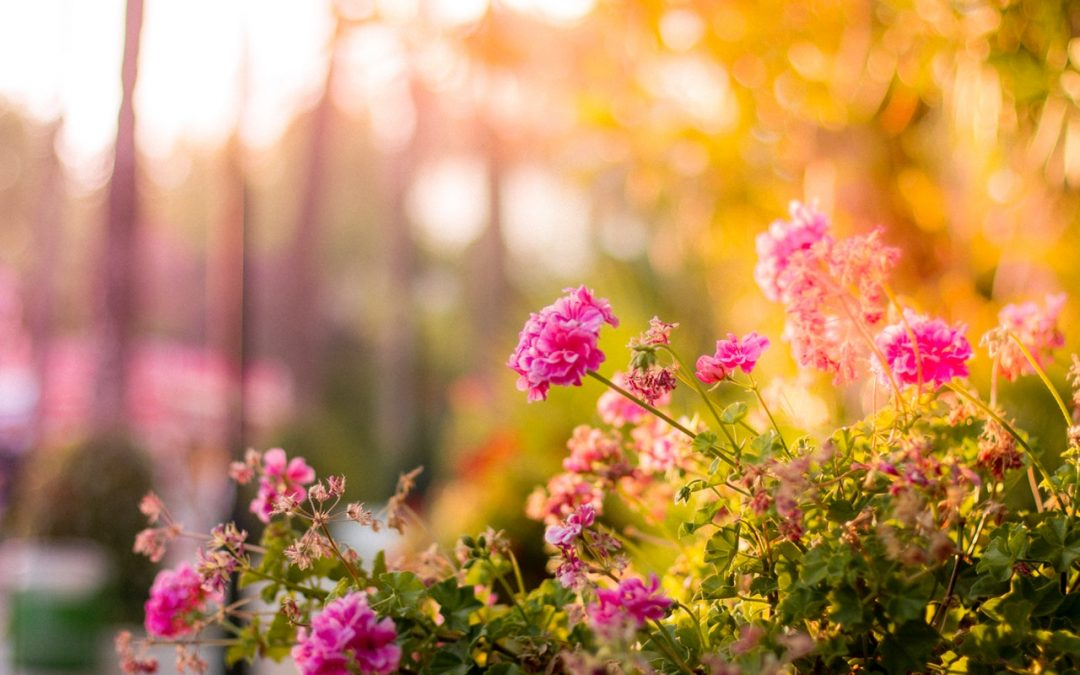 Helping Your Garden Grow in the Summer